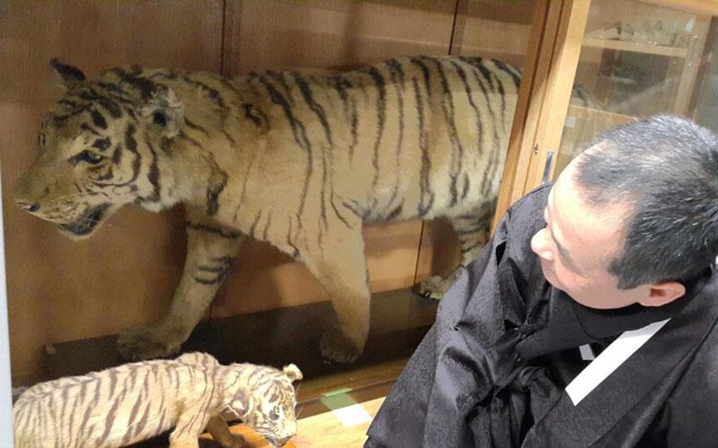 朝鮮虎の標本、韓国市民団体が同志社に寄贈要請