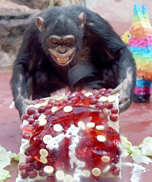 たくさんの果物が付いた大きなケーキは誰のもの?
