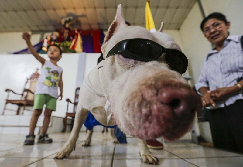 犬だって健康祈願、着飾って教会のミサに出席