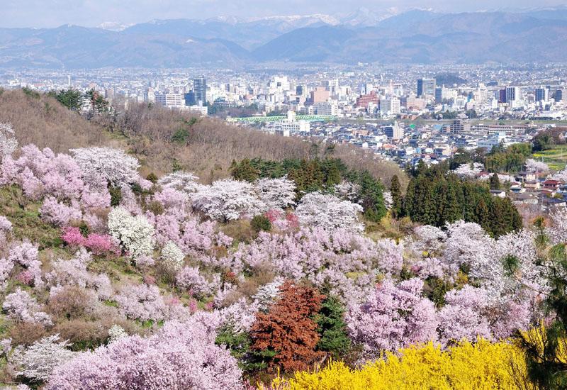 春を待つ福島「花見山」、進化続ける「桃源郷」