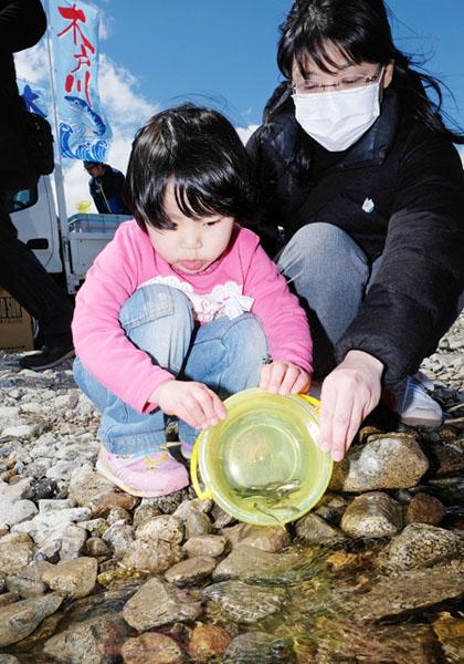 福島の木戸川でサケの稚魚5000匹を放流