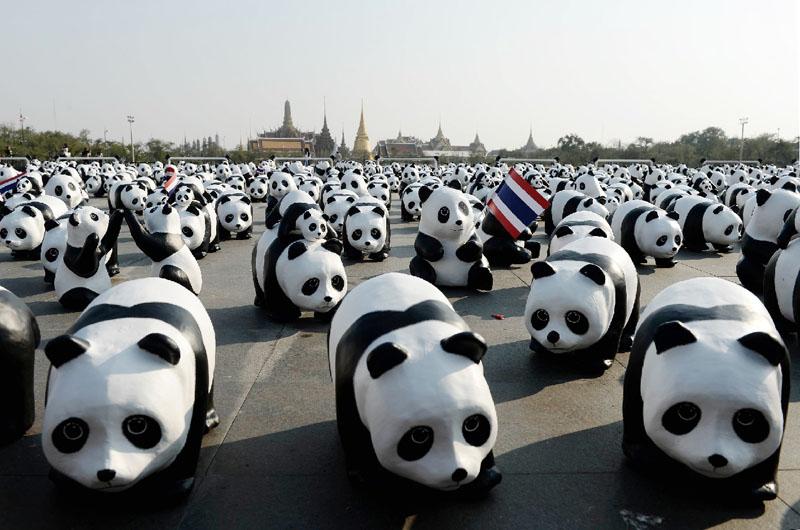 絶滅の危機にひんした動物たちを忘れないで