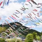 群馬県神流町で悠々と空泳ぐ800匹のコイの群れ
