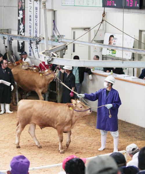 地震後初、熊本県特産「あか牛」の競りが開催