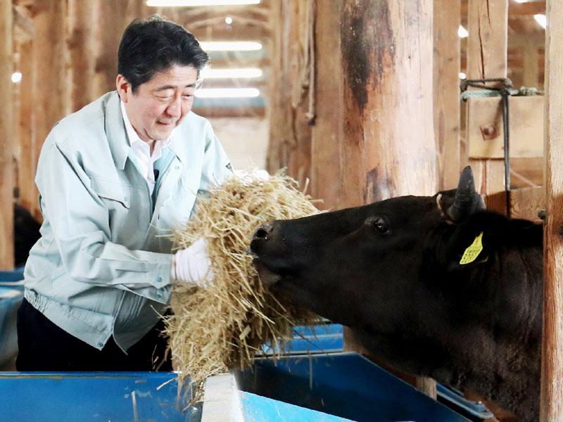 安倍首相が山形県を訪問、農業の現場を視察