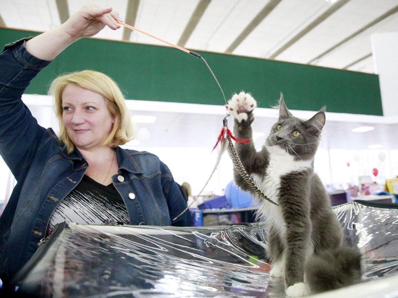 猫に夢中、300匹登場する「キャット・ショー」