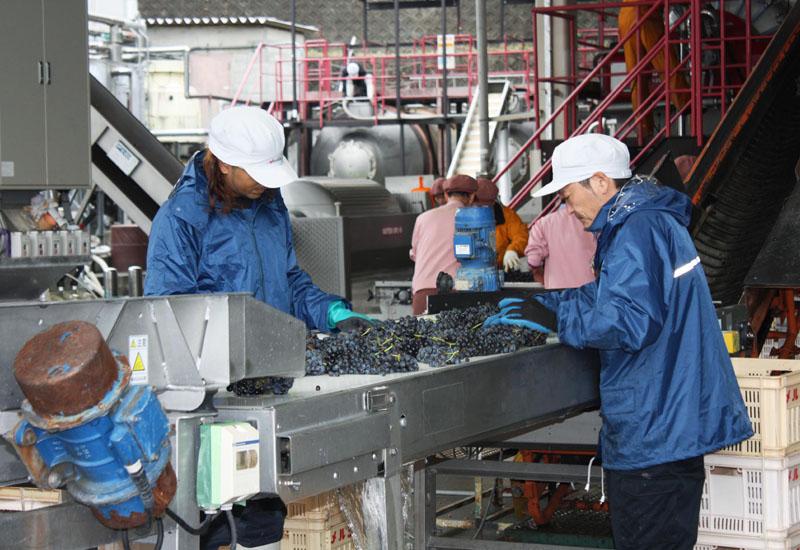 人気高まる「日本ワイン」、国産ブドウの確保課題に