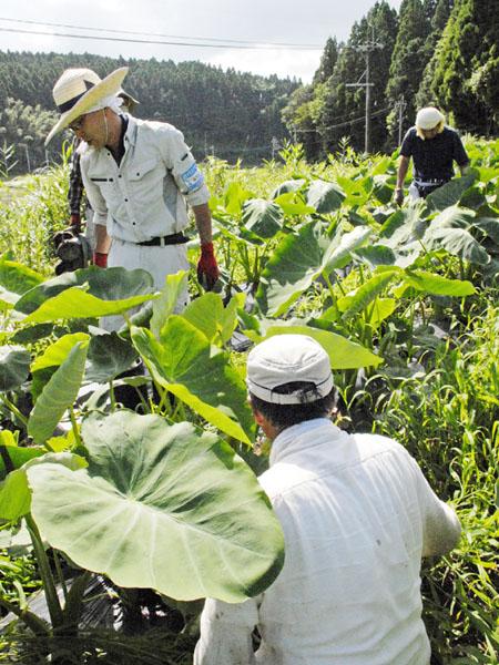 熊本県西原村、繁忙期に農業ボランティアが活躍