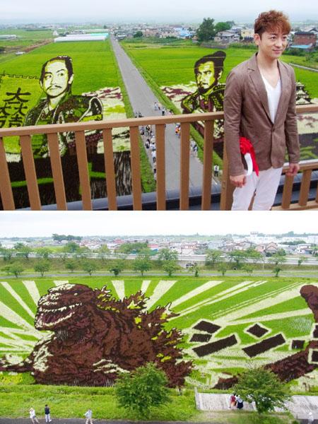 「田んぼアート」、今年は「真田丸」「ゴジラ」