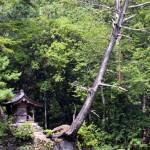 「水神社」のほこらと絶壁に立ち枯れる巨木