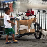 無邪気に犬と遊ぶ路上生活者の子供