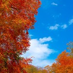 autumn-leaves_00038-2