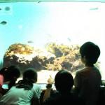 葛西臨海水族園が子供たちに教育プログラムを