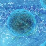 stem-cell-163711_640-2
