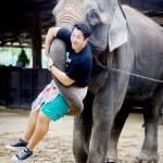 国外からの観光客増加、ゾウも経済成長に貢献