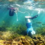 鳥羽・志摩の海女漁、重要民俗文化財に指定へ