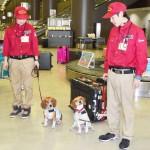 検疫探知犬2頭が成田空港でデビュー