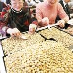 節分の豆まきの準備、1トンの大豆に福を込めて