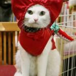 忍者姿の看板猫、伊賀市の「むらい萬香園」で