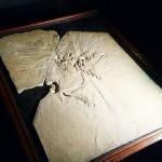 始祖鳥や「呪われたアメジスト」など日本初公開