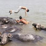 暑さ忘れてバファローと水遊び