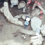 マストドンの骨に石器跡、北米にも人類が存在?