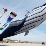 巨大なクジラ型カイト、大空を舞う