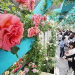 国内最大規模、100万輪のバラの祭典が始まる