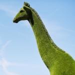 「緑のキリン」が登場、世界の園芸家が腕を競う