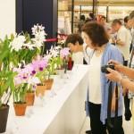 香りを楽しむ「第57回蘭友会らん展」を開催