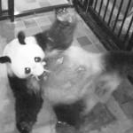 上野動物園でパンダの赤ちゃんが誕生