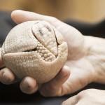 ミツオビアルマジロの赤ちゃんがボールに変身