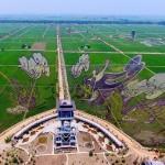 巨大な竜の模様が現れる、田んぼでアート