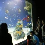 癒やしと潤いの空間「マリホ水族館」オープン