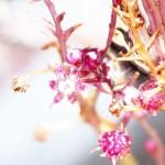 光合成しない「菌従属栄養植物」、新種を発見