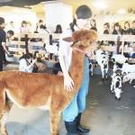 パソナ、ビジネス街に「大手町牧場」を開設