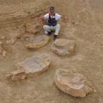 岡山理大、ゴビ砂漠で最大級の恐竜歩行跡を発見