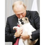 プーチン露大統領に新たな子犬をプレゼント
