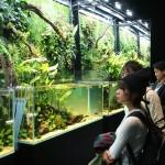 天野さんが提唱、自然界を水槽に再現するアート