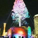 「世界一」のツリー点灯、願い事で輝き増す
