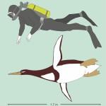 史上最大級のペンギン、体長170㌢体重100㌔か