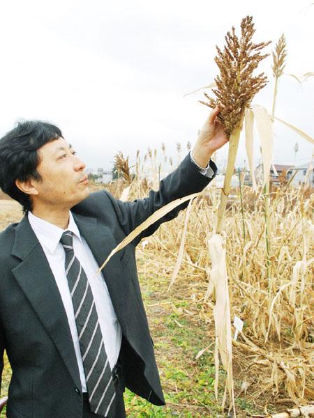 茨城大、耕作放棄地を「植物油田」に