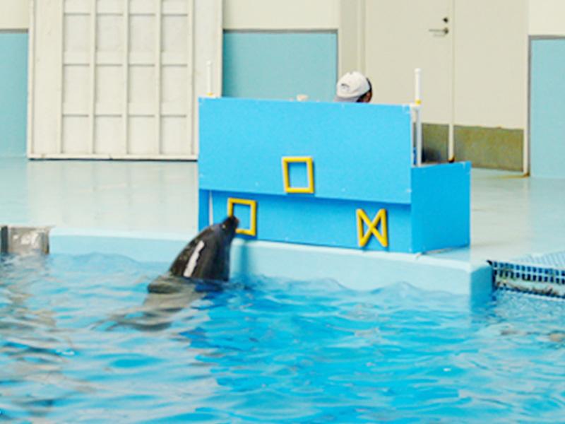 視覚実験で検証、見ている世界はイルカも同じ?