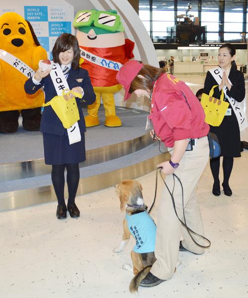 「検疫探知犬」が成田空港に初登場