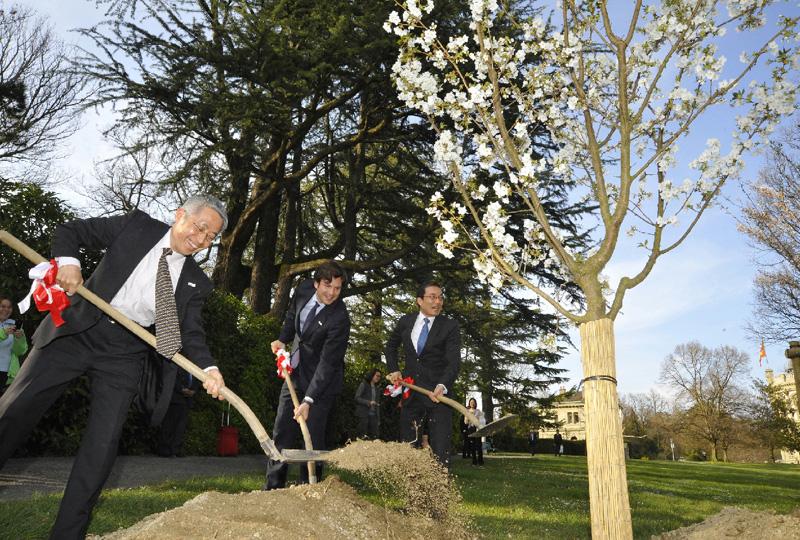 日本とスイスの友好関係祝い、満開の桜植樹