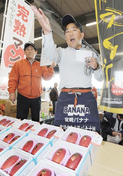 完熟マンゴー「太陽のタマゴ」の販売が解禁