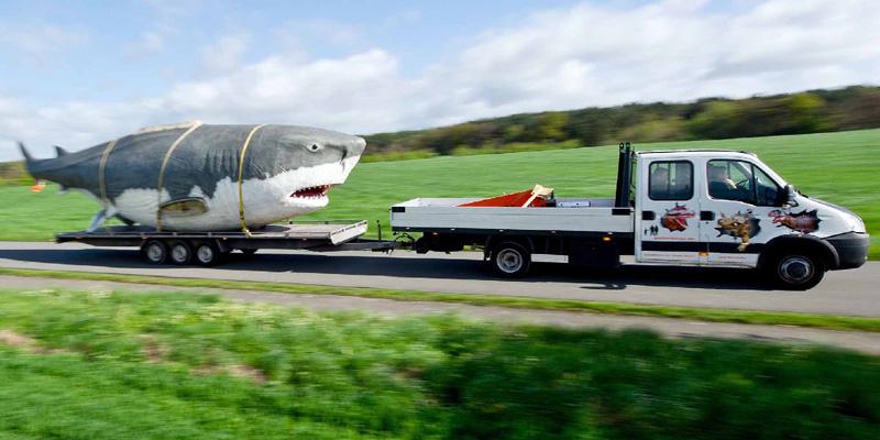 古代の巨大サメ「メガロドン」を捕獲!?