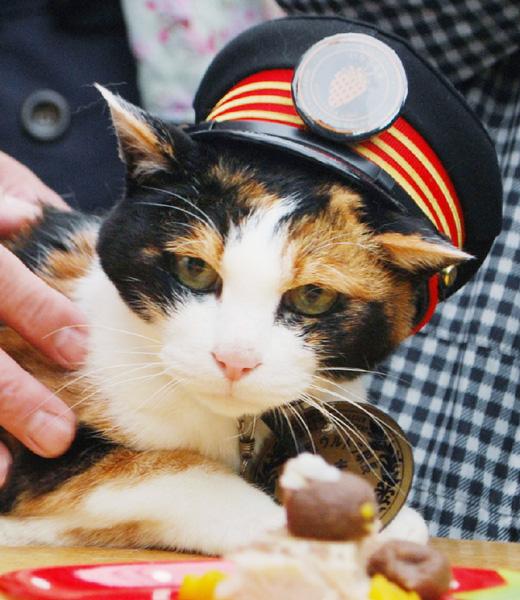 三毛猫の「たま」駅長、喜寿の祝い