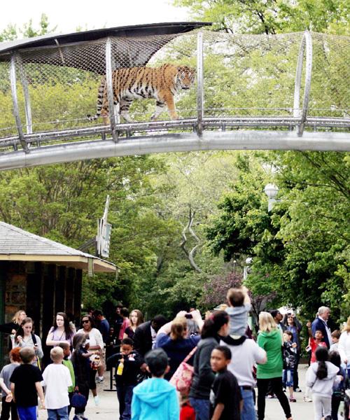 頭上のトラに注意!