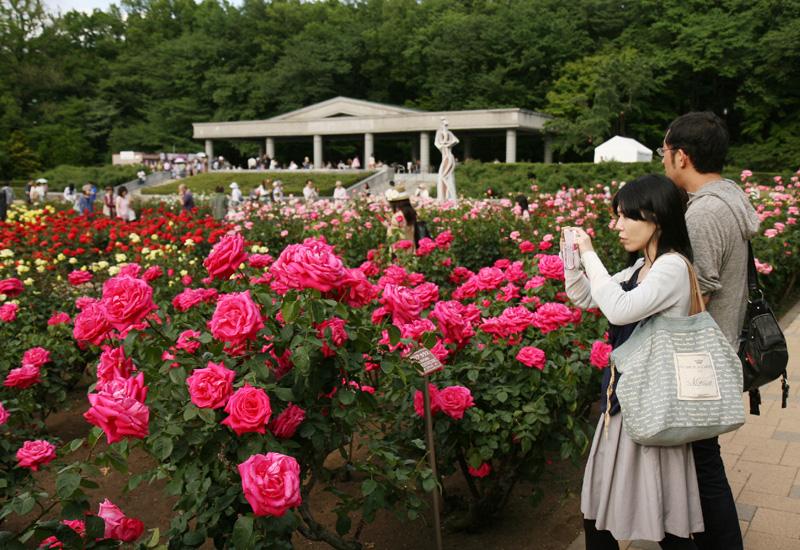5200株の絢爛豪華にバラが満開